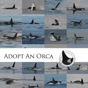 jpod whale museum adopt orca whale san juan islands salish sea friday harbor windermere real estate orcas island wally gudgell group